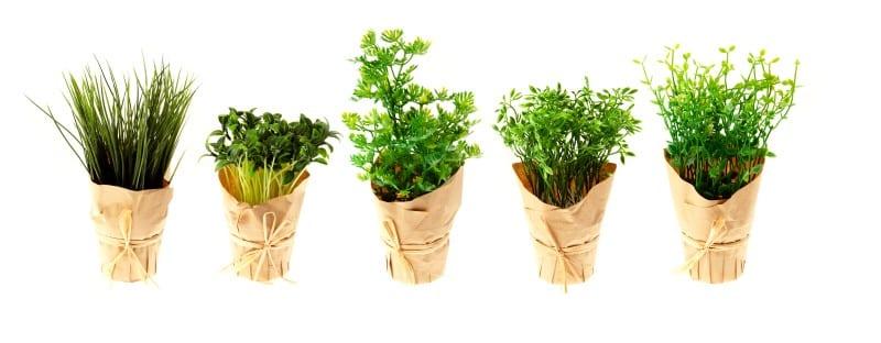 Mini Herb Garden banner