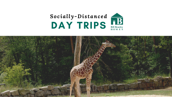 Socially distanced day trips banner