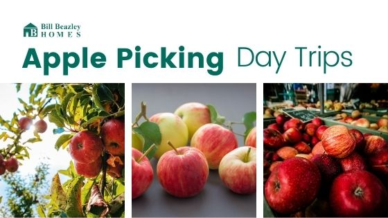 Apple picking day trips banner