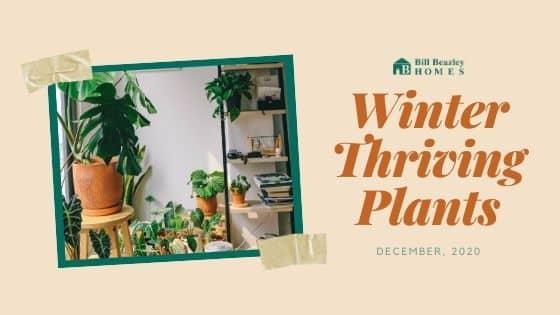 Winter thriving plants banner