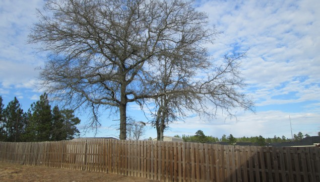 An image of new fencing in Southhampton.