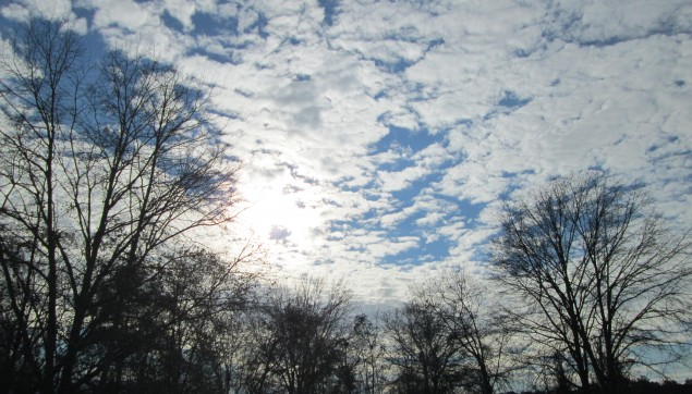 An image of the trees in winter and the cloudy sky.